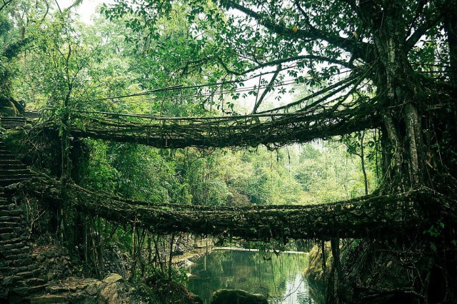 Root-Bridge-In-India